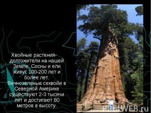 Хвойные растения-долгожители на нашей Земле. Сосны и ели живут 100-200 лет и бол