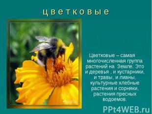 Цветковые – самая многочисленная группа растений на Земле. Это и деревья , и кус