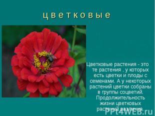 Цветковые растения - это те растения , у которых есть цветки и плоды с семенами.