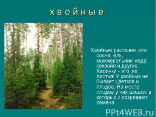 Хвойные растения -это сосна, ель, можжевельник, кедр, секвойя и другие. Хвоинки