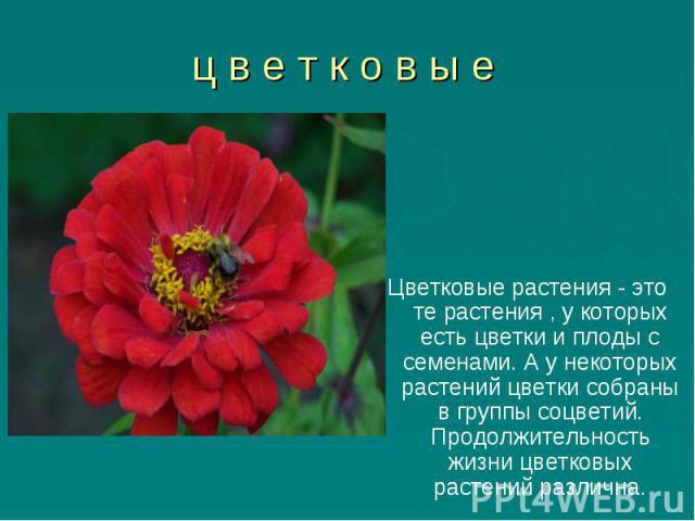 Цветковые растения - это те растения , у которых есть цветки и плоды с семенами. А у некоторых растений цветки собраны в группы соцветий. Продолжительность жизни цветковых растений различна. Цветковые растения - это те растения , у которых есть цвет…