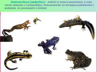Земноводные (амфибии) – любой из класса животных, в том числе лягушки и саламанд