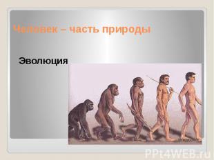 Человек – часть природы Эволюция