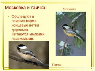 Московка и гаичка Обследуют в поисках корма концевые ветви деревьев. Питаются ме