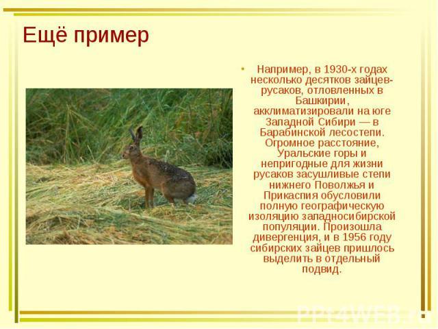 Ещё пример Например, в 1930-х годах несколько десятков зайцев-русаков, отловленных в Башкирии, акклиматизировали на юге Западной Сибири — в Барабинской лесостепи. Огромное расстояние, Уральские горы и непригодные для жизни русаков засушливые степи н…