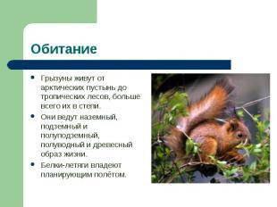 Грызуны живут от арктических пустынь до тропических лесов, больше всего их в сте