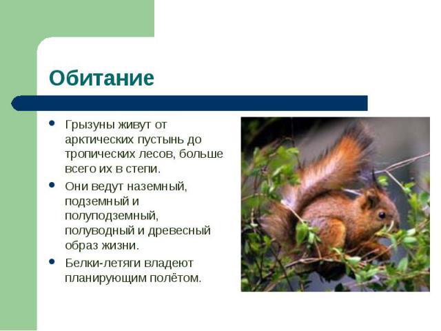 Грызуны живут от арктических пустынь до тропических лесов, больше всего их в степи. Грызуны живут от арктических пустынь до тропических лесов, больше всего их в степи. Они ведут наземный, подземный и полуподземный, полуводный и древесный образ жизни…
