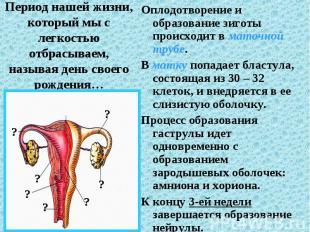 Оплодотворение и образование зиготы происходит в маточной трубе. Оплодотворение