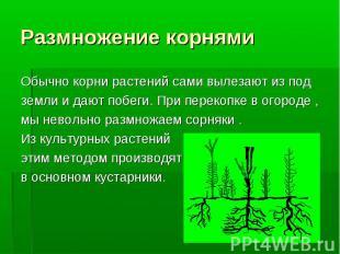 Обычно корни растений сами вылезают из под Обычно корни растений сами вылезают и