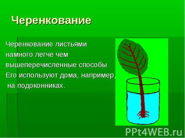 Черенкование листьями Черенкование листьями намного легче чем вышеперечисленные способы Его используют дома, например, на подоконниках.
