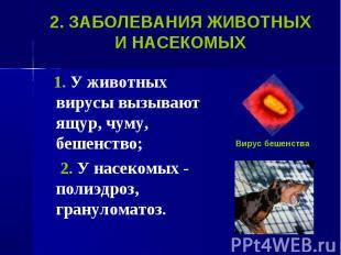 1. У животных вирусы вызывают ящур, чуму, бешенство; 1. У животных вирусы вызыва