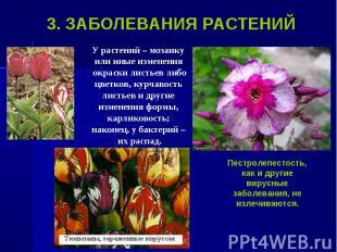 У растений – мозаику У растений – мозаику или иные изменения окраски листьев либ