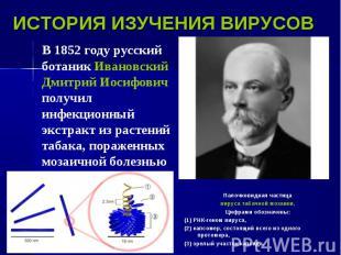 В 1852 году русский ботаник Ивановский Дмитрий Иосифович получил инфекционный эк