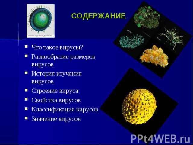 Что такое вирусы? Что такое вирусы? Разнообразие размеров вирусов История изучения вирусов Строение вируса Свойства вирусов Классификация вирусов Значение вирусов