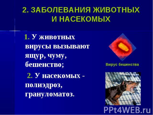 1. У животных вирусы вызывают ящур, чуму, бешенство; 1. У животных вирусы вызывают ящур, чуму, бешенство; 2. У насекомых - полиэдроз, грануломатоз.
