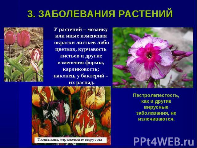 У растений – мозаику У растений – мозаику или иные изменения окраски листьев либо цветков, курчавость листьев и другие изменения формы, карликовость; наконец, у бактерий – их распад.