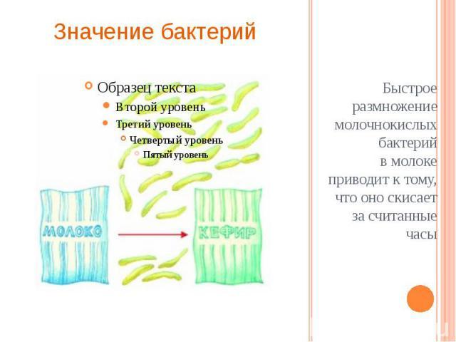 Быстрое размножение молочнокислых бактерий вмолоке приводит к тому, что оно скисает за считанные часы Быстрое размножение молочнокислых бактерий вмолоке приводит к тому, что оно скисает за считанные часы
