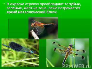 В окраске стрекоз преобладают голубые, зеленые, желтые тона, реже встречается яр