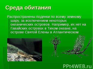 Распространены поденки по всему земному шару, за исключением некоторых океаничес