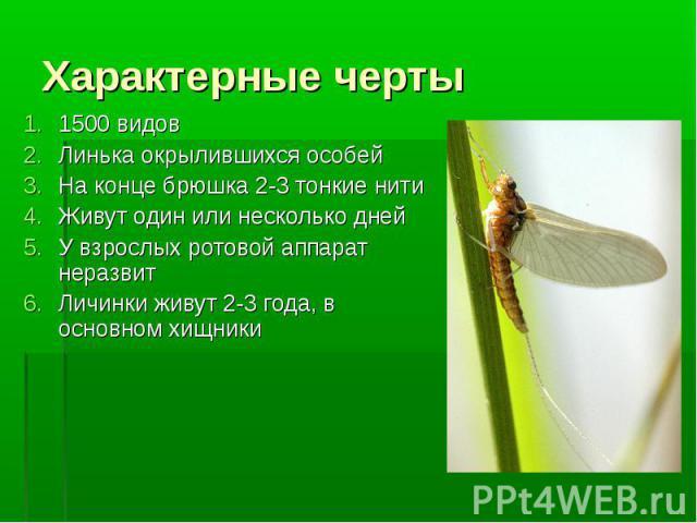 1500 видов 1500 видов Линькаокрылившихсяособей На конце брюшка 2-3 тонкие нити Живут один или несколько дней У взрослых ротовой аппарат неразвит Личинки живут 2-3 года, в основном хищники