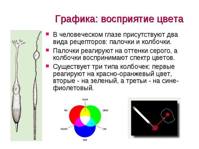 В человеческом глазе присутствуют два вида рецепторов: палочки и колбочки. В человеческом глазе присутствуют два вида рецепторов: палочки и колбочки. Палочки реагируют на оттенки серого, а колбочки воспринимают спектр цветов. Существует три типа кол…