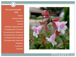 Растительный мир Абелия Аир (растение) Алоказия Аралия Барбарис подражающий Бело