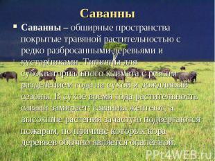 Саванны – обширные пространства покрытые травяной растительностью с редко разбро