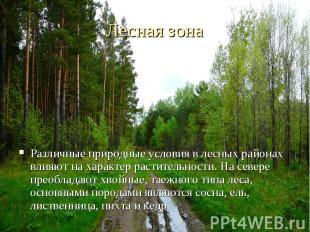 Различные природные условия в лесных районах влияют на характер растительности.