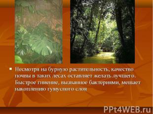 Несмотря на бурную растительность, качество почвы в таких лесах оставляет желать