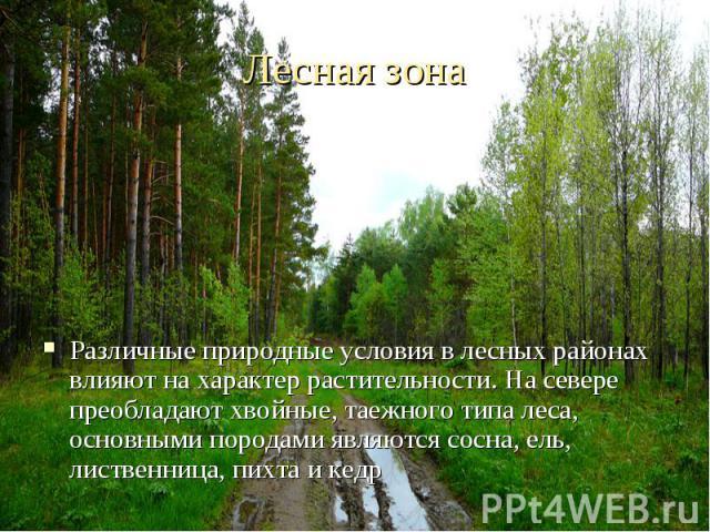 Различные природные условия в лесных районах влияют на характер растительности. На севере преобладают хвойные, таежного типа леса, основными породами являются сосна, ель, лиственница, пихта и кедр Различные природные условия в лесных районах влияют …