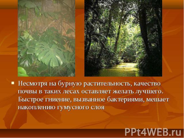 Несмотря на бурную растительность, качество почвы в таких лесах оставляет желать лучшего. Быстрое гниение, вызванное бактериями, мешает накоплению гумусного слоя Несмотря на бурную растительность, качество почвы в таких лесах оставляет желать лучшег…