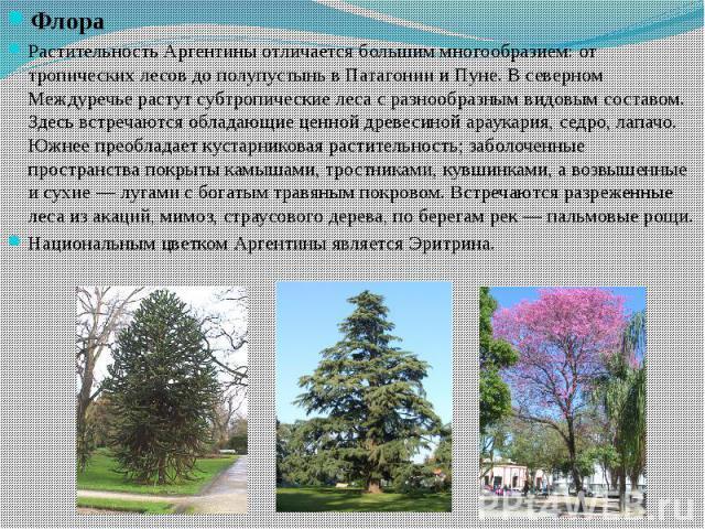 Флора Флора Растительность Аргентины отличается большим многообразием: от тропических лесов до полупустынь в Патагонии и Пуне. В северном Междуречье растут субтропические леса с разнообразным видовым составом. Здесь встречаются обладающие ценной дре…