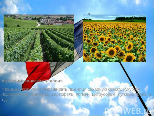 Агроклиматические условия. Агроклиматические условия. Франции позволяют выращивать пшеницу, сахарную свеклу, кукурузу, подсолнечник, виноград, картофель, яблоки, цитрусовые, луговые травы и т.д.