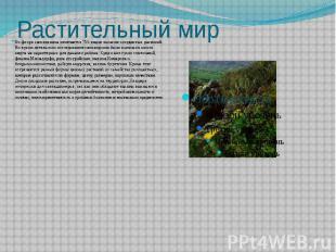 Растительный мир Во флоре заповедника отмечается 755 видов высших сосудистых рас