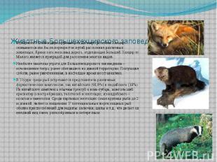 Животные Большехехцирского заповедника В результате слияия двух крупных рек Даль
