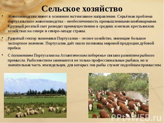 Сельское хозяйство Животноводство имеет в основном экстенсивное направление. Серьёзная проблема португальского животноводства – необеспеченность промышленными комбикормами. Крупный рогатый скот разводят преимущественно в средних и мелких крестьянски…