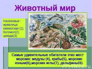 Самые удивительные обитатели этих мест морские: медузы (4), крабы(5), морские ко