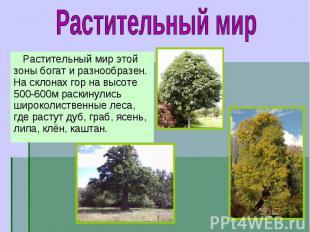 Растительный мир этой зоны богат и разнообразен. На склонах гор на высоте 500-60