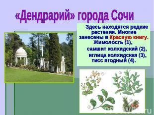 Здесь находятся редкие растения. Многие занесены в Красную книгу. Жимолость (1),