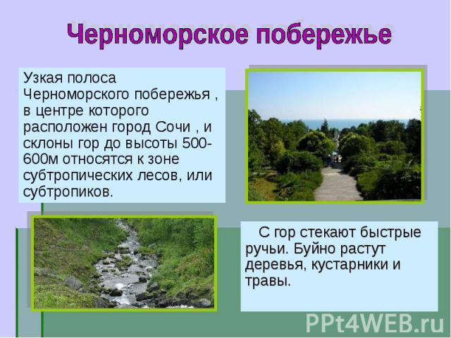 Узкая полоса Черноморского побережья , в центре которого расположен город Сочи , и склоны гор до высоты 500-600м относятся к зоне субтропических лесов, или субтропиков. Узкая полоса Черноморского побережья , в центре которого расположен город Сочи ,…