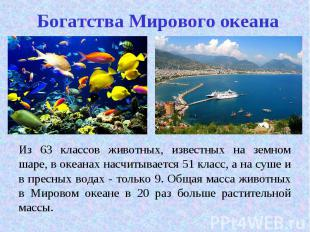 Из 63 классов животных, известных на земном шаре, в океанах насчитывается 51 кла