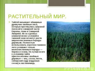 Тайгой называют обширные дремучие хвойные леса, которые протянулись широкой поло