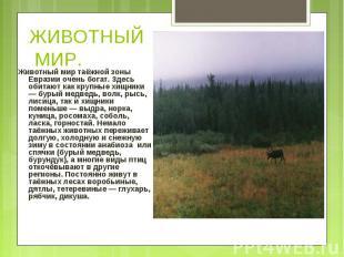 Животный мир таёжной зоны Евразии очень богат. Здесь обитают как крупные хищники