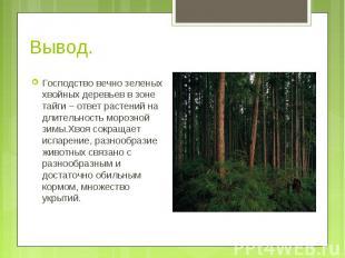 Господство вечно зеленых хвойных деревьев в зоне тайги – ответ растений на длите