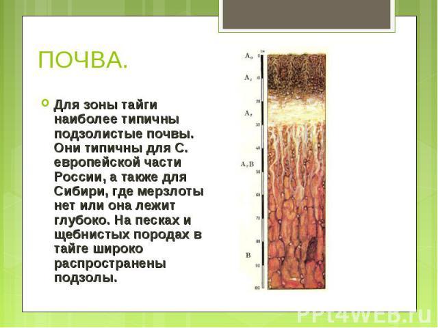 Для зоны тайги наиболее типичны подзолистые почвы. Они типичны для С. европейской части России, а также для Сибири, где мерзлоты нет или она лежит глубоко. На песках и щебнистых породах в тайге широко распространены подзолы. Для зоны тайги наиболее …