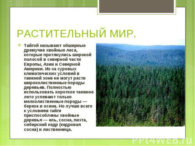 Тайгой называют обширные дремучие хвойные леса, которые протянулись широкой полосой в северной части Европы, Азии и Северной Америки. Из-за суровых климатических условий в таежной зоне не могут расти широколиственные породы деревьев. Полностью испол…