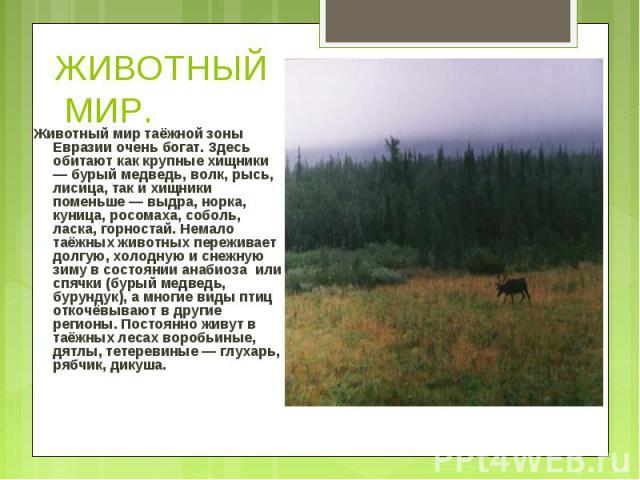Животный мир таёжной зоны Евразии очень богат. Здесь обитают как крупные хищники — бурый медведь, волк, рысь, лисица, так и хищники поменьше — выдра, норка, куница, росомаха, соболь, ласка, горностай. Немало таёжных животных переживает долгую, холод…