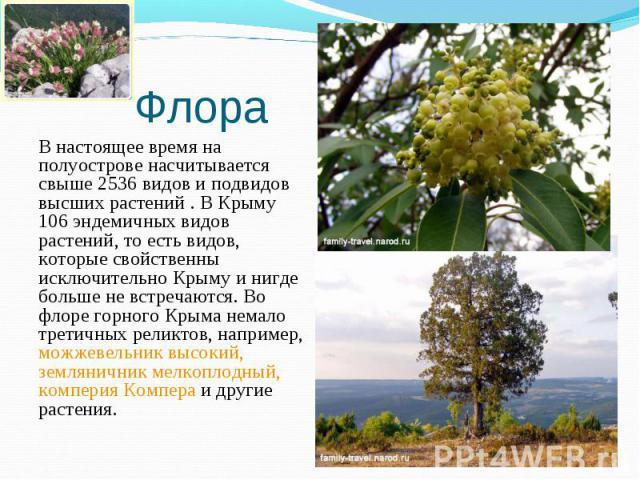 В настоящее время на полуострове насчитывается свыше 2536 видов и подвидов высших растений . В Крыму 106 эндемичных видов растений, то есть видов, которые свойственны исключительно Крыму и нигде больше не встречаются. Во флоре горного Крыма немало т…