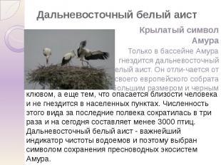 Дальневосточный белый аист Крылатый символ Амура Только в бассейне Амура гнездит