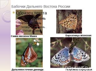Бабочки Дальнего Востока России